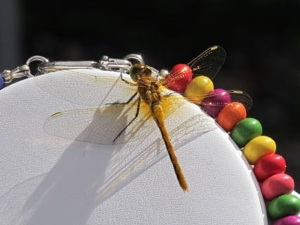 Beads & Dragonfly