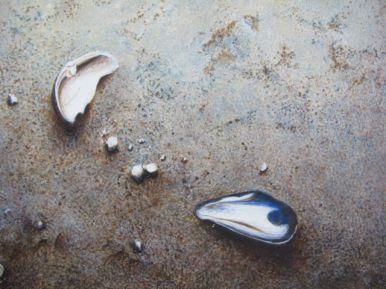 Sand & Broken Shell #3
